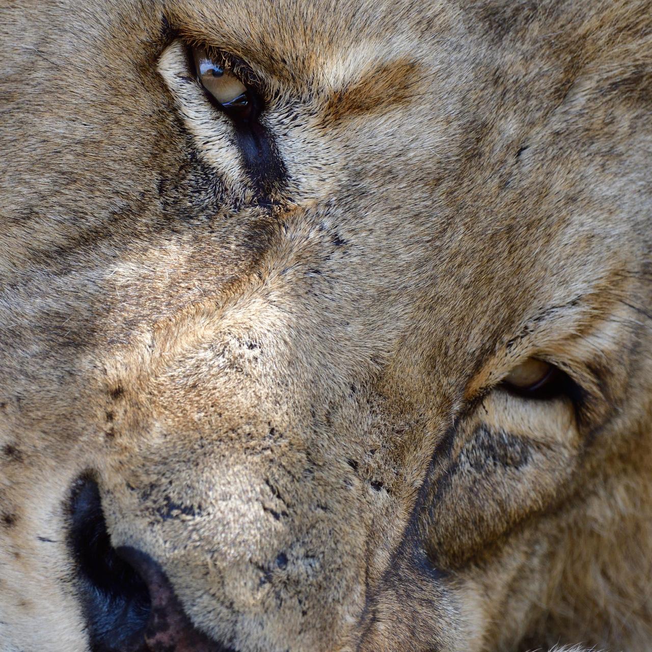 アフリカに野生の輝きを追って<br>Part 1 動物たちの一瞬の表情を狙う