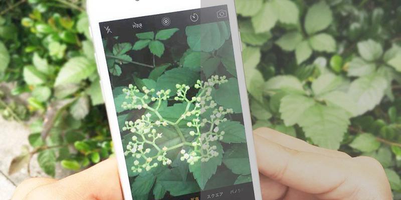 iPhoneカメラ、もはや一眼超え!?「写真上手いね」と言わせてモテるマル秘テク