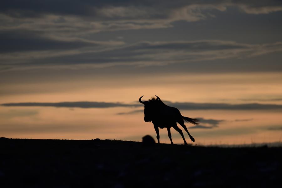 記録メディア:サンディスクエクストリームプロSDUHS-Ⅱカード/ボツワナ,マシャトゥ動物保護区