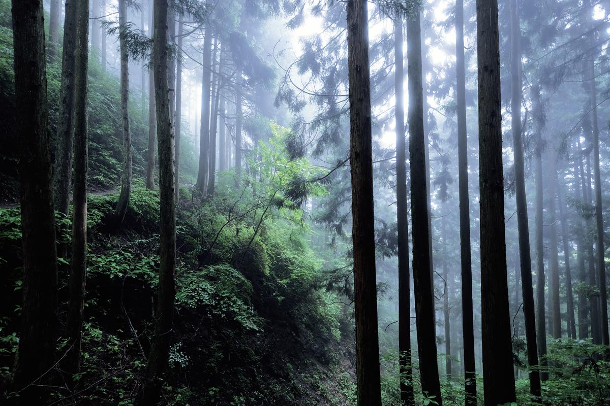 記録メディア:サンディスク エクストリーム プロ SD UHS-Ⅱカード/撮影地:御岳山